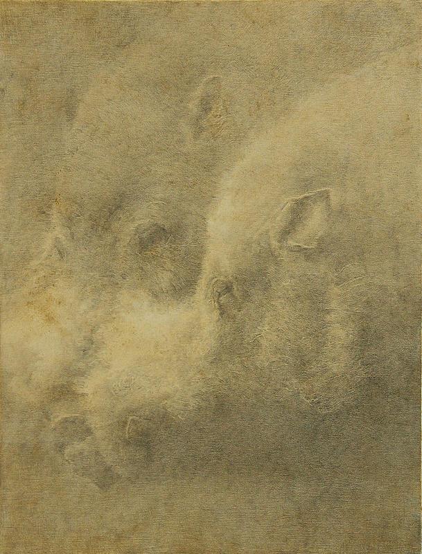 野猪肖像02